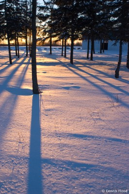 Long Shadows at Sunrise