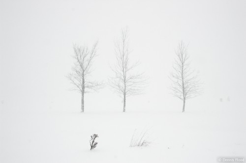 Three Trees in a Blizzard