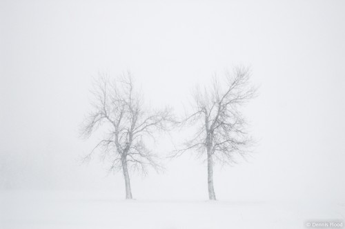 Two Trees in a Storm