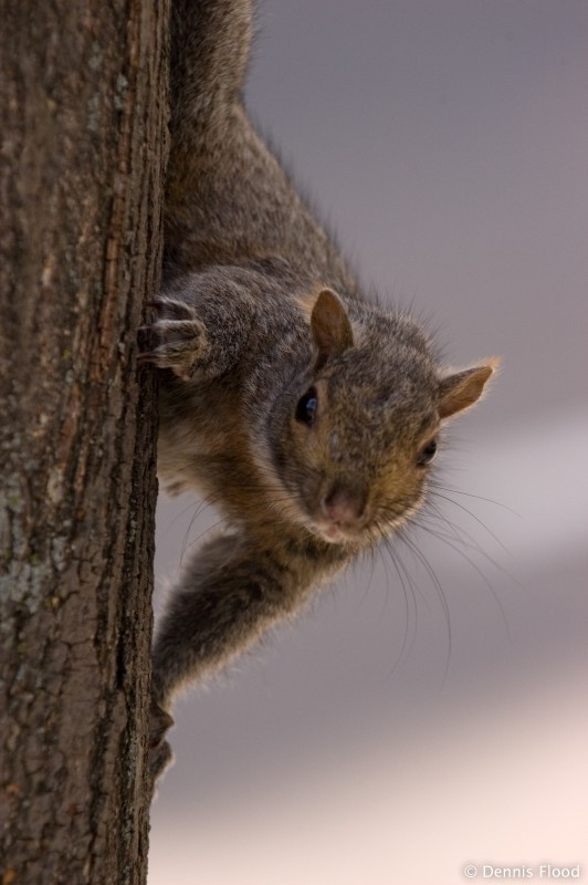 Eye to Eye with a Squirrel