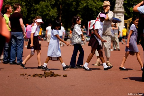 Crowd Walking Past Horse Dung