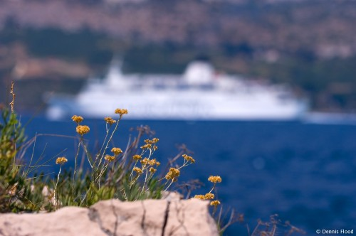 Flowers and a Ferry
