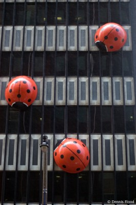 Ladybugs in the Rain