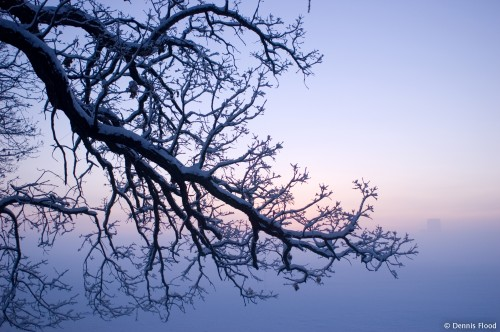 Oak Tree Before Winter Sunrise