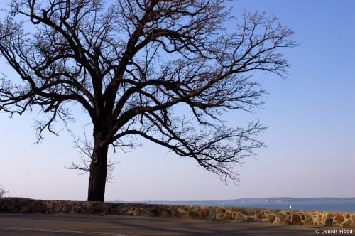 Overlooking Lake Mendota