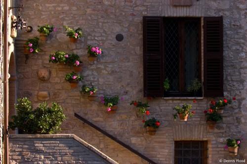 Stone Wall Flowers