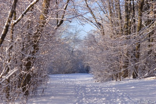 Trail in Winter