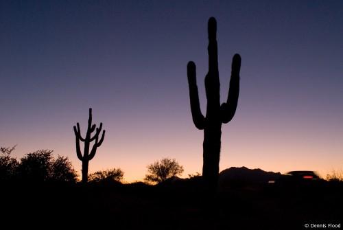Arizona Desert at Sunset