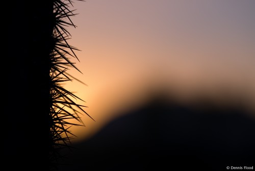 Desert Silhouettes at Sunset