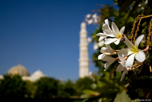 Mosque Flowers