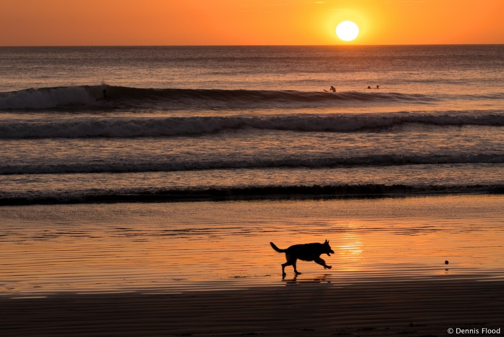 Dog Playing on Beach at Sunset