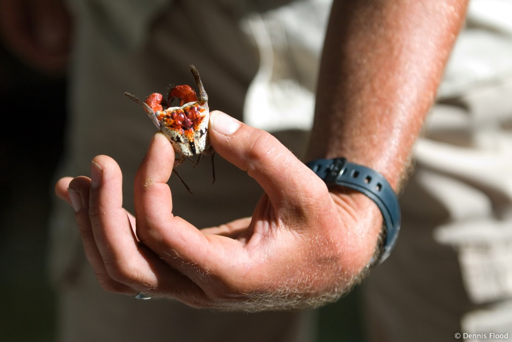 Man Holding Red Crab