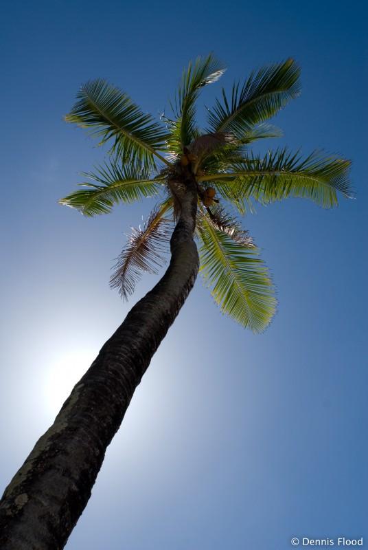 external image tall_palm_tree_4096.jpg