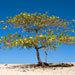 Shade Tree on the Beach