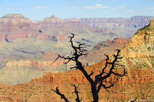 Dead Tree Silohuette
